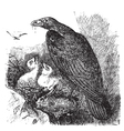 Golden eagle vintage engraving vector image