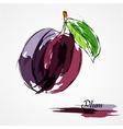 Plum fruit vector image