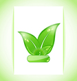 Natural green leaves background vector image