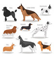 different dog pets character breed cartoon style vector image