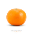 Mandarin isolated on white background vector image