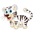 cute baby white tiger walking vector image