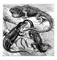 Green lizard engraving vector image