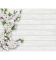 spring cherry branch on white old wood background vector image