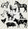 home animals vector image
