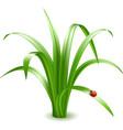 Ladybird on grass vector image