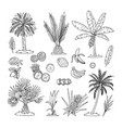 Hand drawn of palm trees vector image
