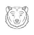 sketch of bears head portrait of forest animal vector image