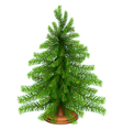 Christmas fir tree vector image vector image