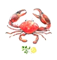 Watercolor crab vector image