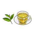 glass cup saucer and fresh green tea leaf vector image