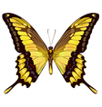 isolated yellow butterfly vector image