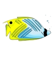 Bright yellow blue colored fish vector image