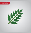 isolated leaves flat icon acacia leaf vector image