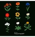 Asteraceae Flowers Set vector image