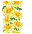 Seamless pattern with chrysanthemum flowers vector image