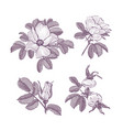 wild rose isolated dog-rose drawing flowers vector image