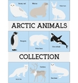 Arctic animals collection vector image