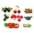 Big group of fresh berries and cherries vector image vector image