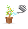 dollar plant vector image vector image
