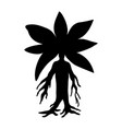 mandragora plant silhouette ancient mythical vector image