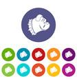 bulldog dog set icons vector image