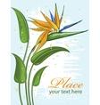 strelitzia bird of paradise flower vector image