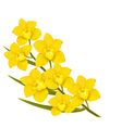 Holiday yellow flowers background vector image