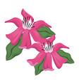 tropical flower foliage plant vector image