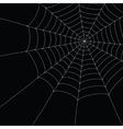 white spider web vector image