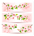 Three spring banners with blossoming sakura brunch vector image vector image