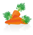 group of carrots issolated over white background vector image
