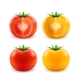 Set of Ripe Red Yellow Green Cut Whole Tomatoes vector image
