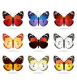 collection of the butterflies4 vector image vector image