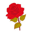 red rose cartoon style on white background vector image