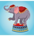 Elephant cartoon of circus vector image