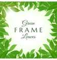 Fresh green leaves frame vector image