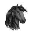 Sketched head of mustang or horse stallion vector image vector image