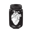 human heart in glass jar isolated print design vector image