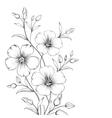 Linum flower vector image