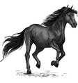 Sketched stallion gallop or horse abling vector image vector image