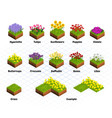 Set of Isometric Flowers vector image