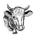 cow black head vector image
