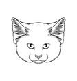 sketch of lynx head portrait of wild cat animal vector image