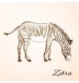 doodle zebra vector image vector image
