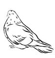 Romantic grace white dove isolated on white vector image