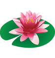 floating pink lotus vector image