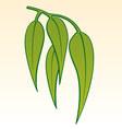gum leaves vector image