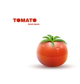 Red Tomato isolated on white Background vector image