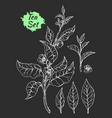 tea set black vector image